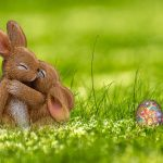 Pet Rabbit Housing Guide